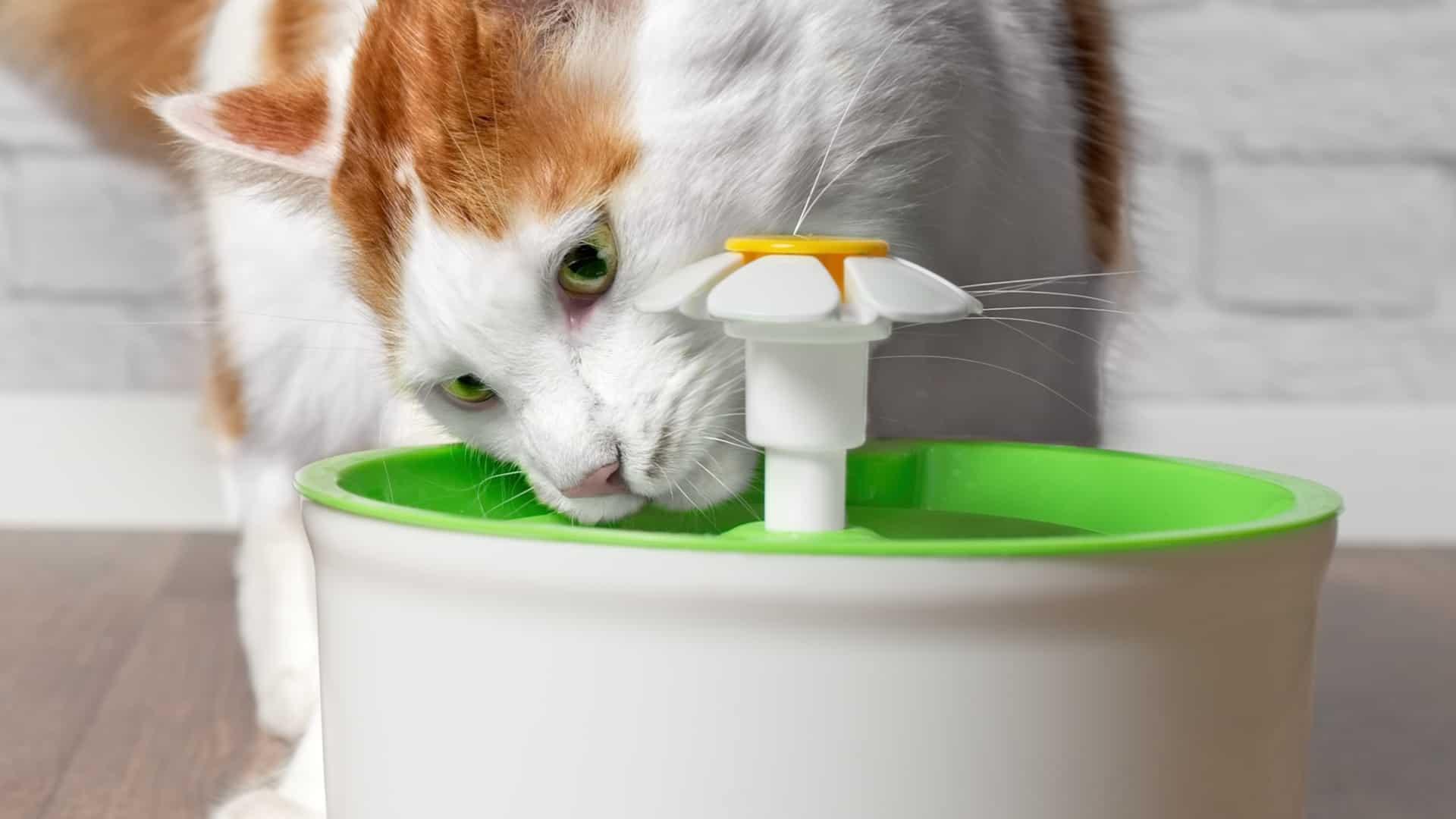 Bebedouro para gatos: Qual é o melhor de 2020?