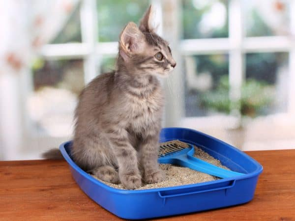 Gato dentro de caixa de areia.