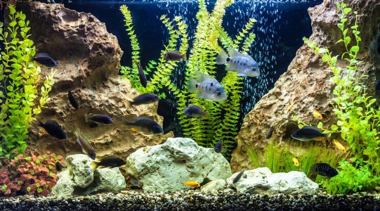 Acuario con pez de agua dulce