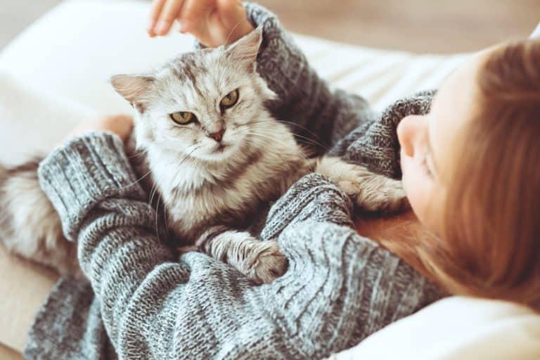 Imagem de gato cinza no colo de sua dona.