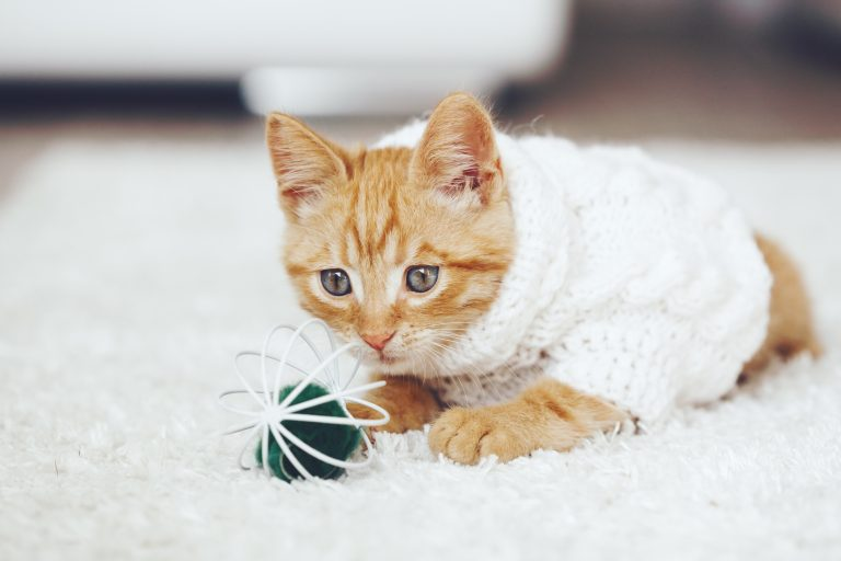 cat toy-2