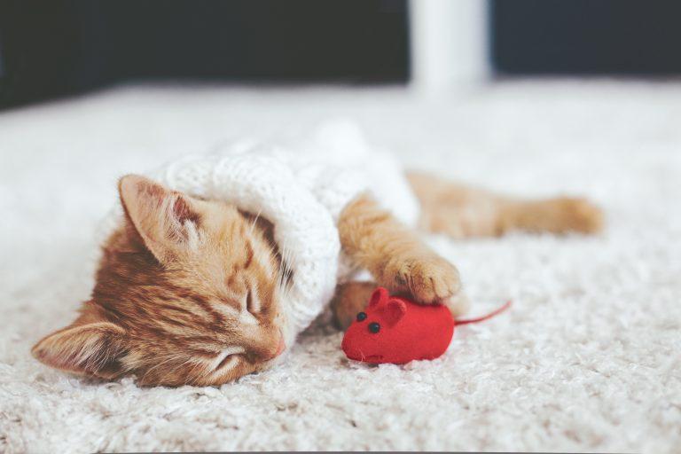 cat toy-4