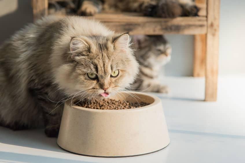 Gato comendo ração em comedouro