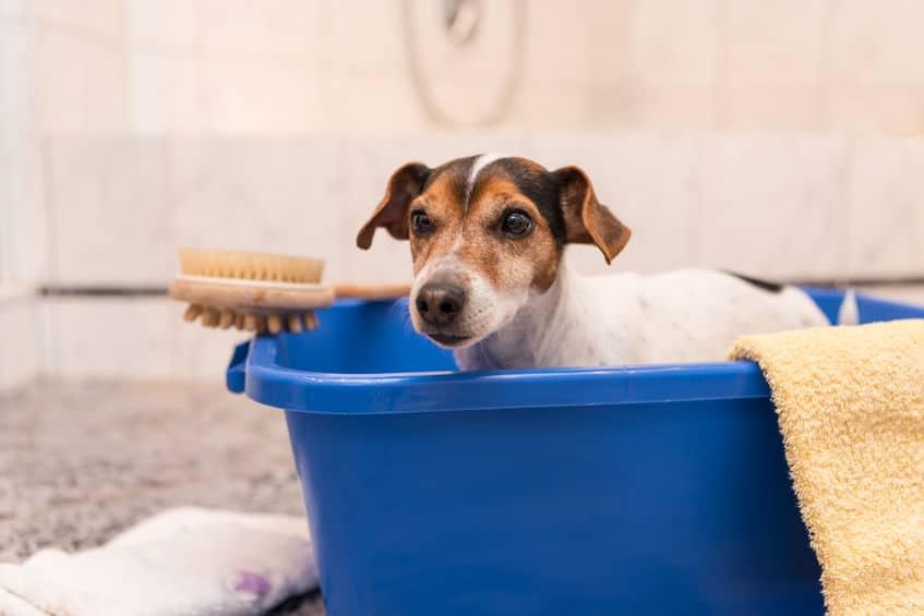 Dog in bathtub.