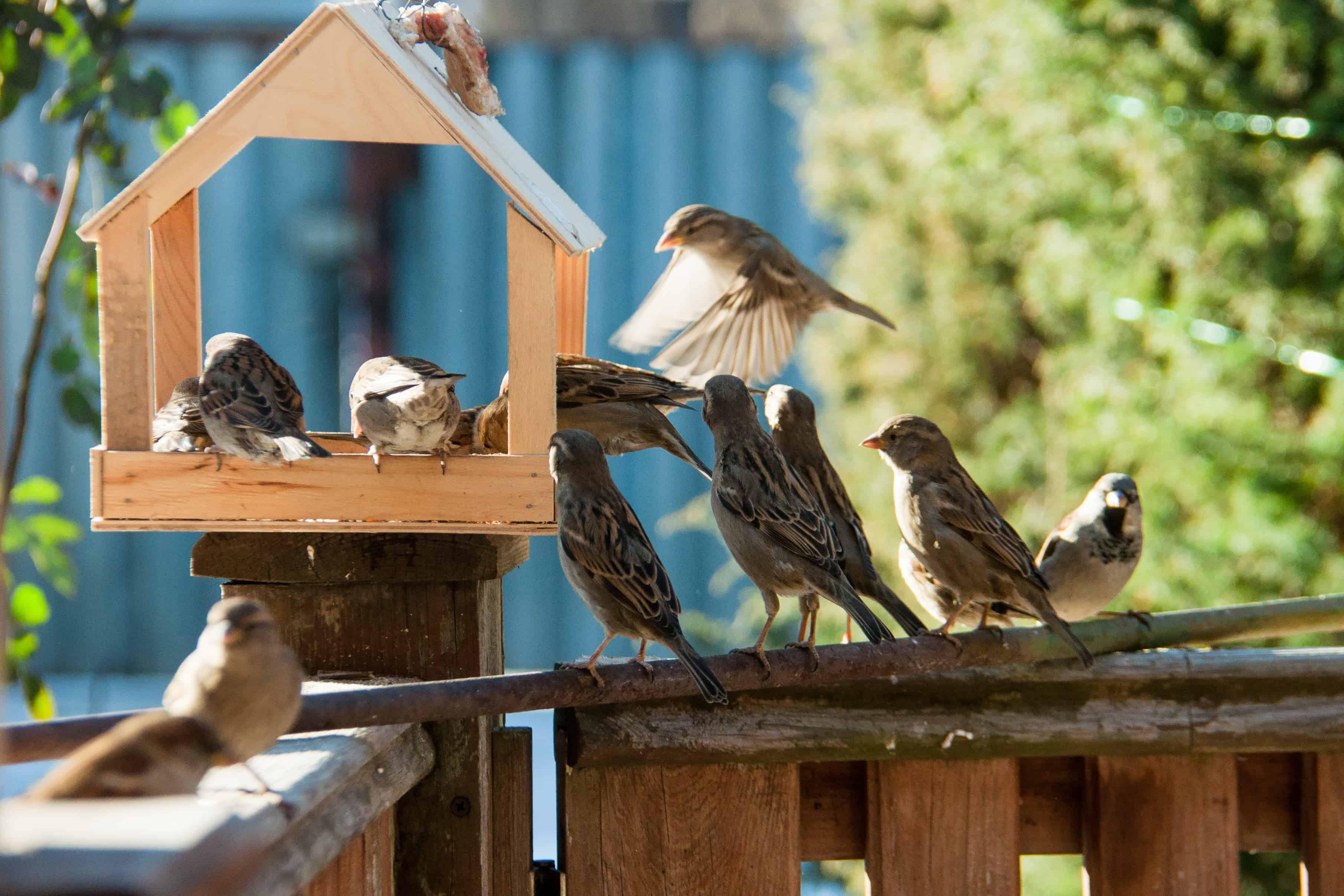 Imagem de comedouro com vários pássaros.