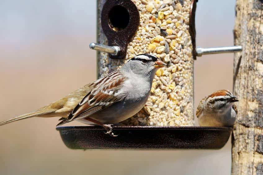 Imagem de pássaros sobre comedouro.