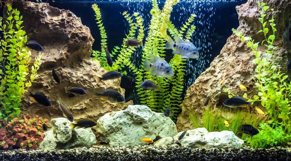 Imagem de aquário com vários tipos de peixe.