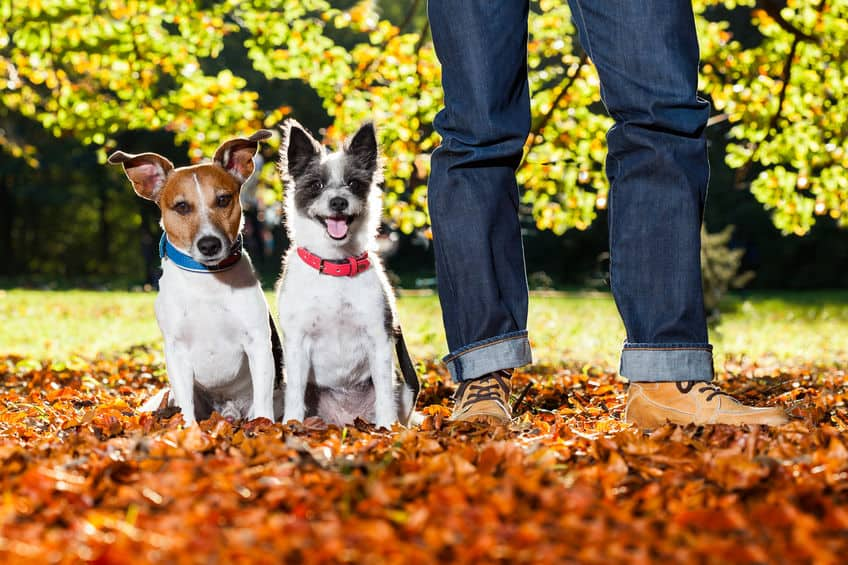 Imagem de cachorros de coleira ao lado do seu dono.