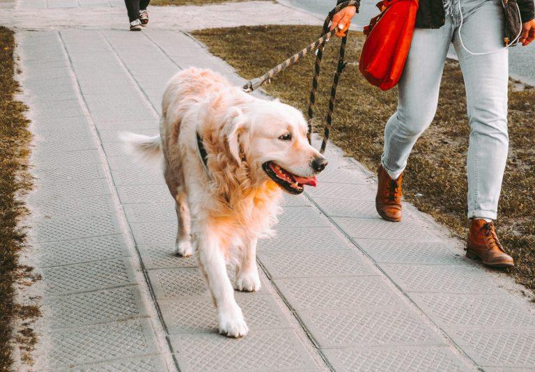 Cachorro com coleira ao lado de dono.