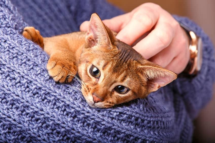 Imagem de gato filhote sendo acariciado.