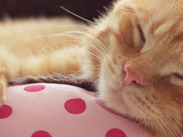 Imagem de gato deitado em cama.