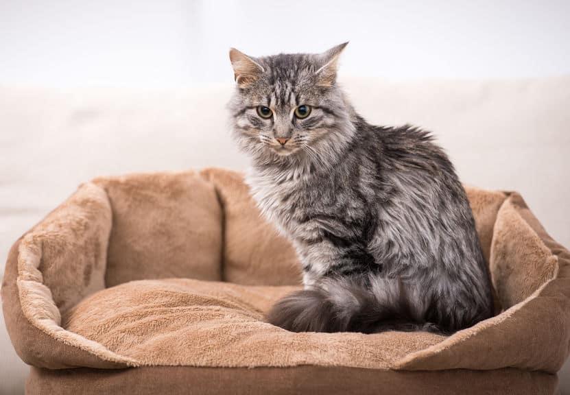 Imagem de gato em cima de cama.