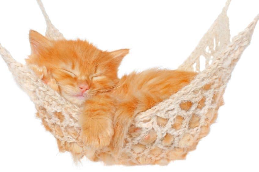 Gato deitado em rede.