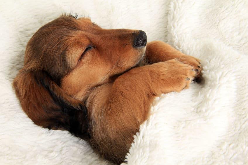 Imagem de cachorro dormindo com cobertor.