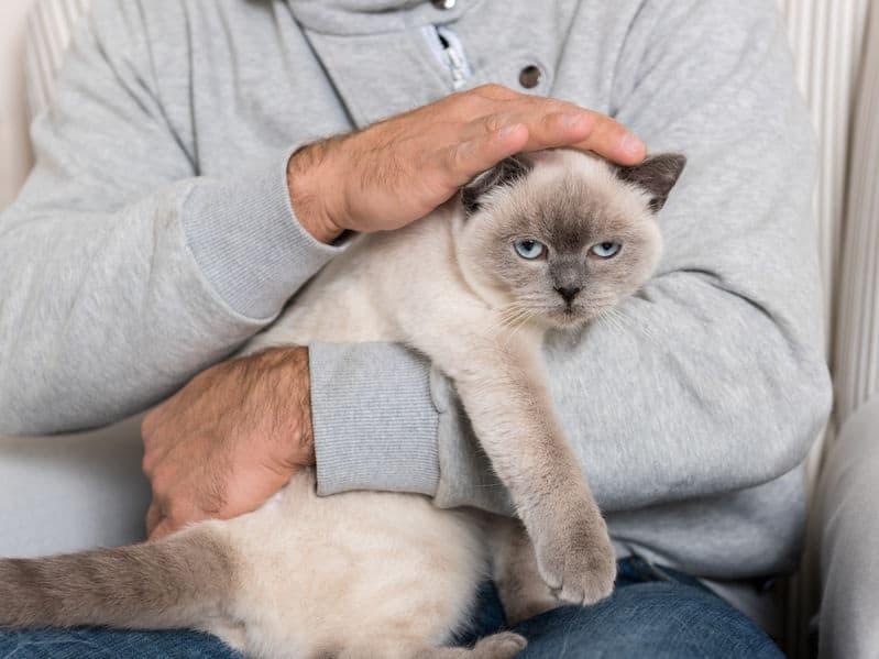 Gato sendo segurado por um homem cujo rosto não é mostrado