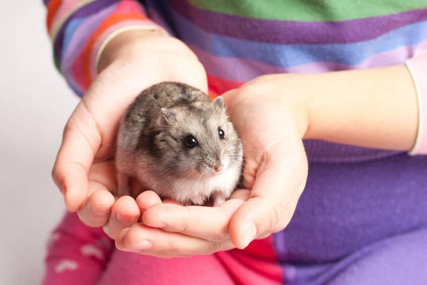 Imagem de pessoa segurando hamster.