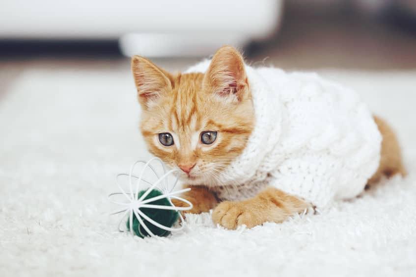 Imagem de gatinho e seu brinquedo.