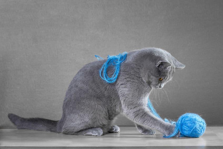 Gato brincando com novelo de lã.