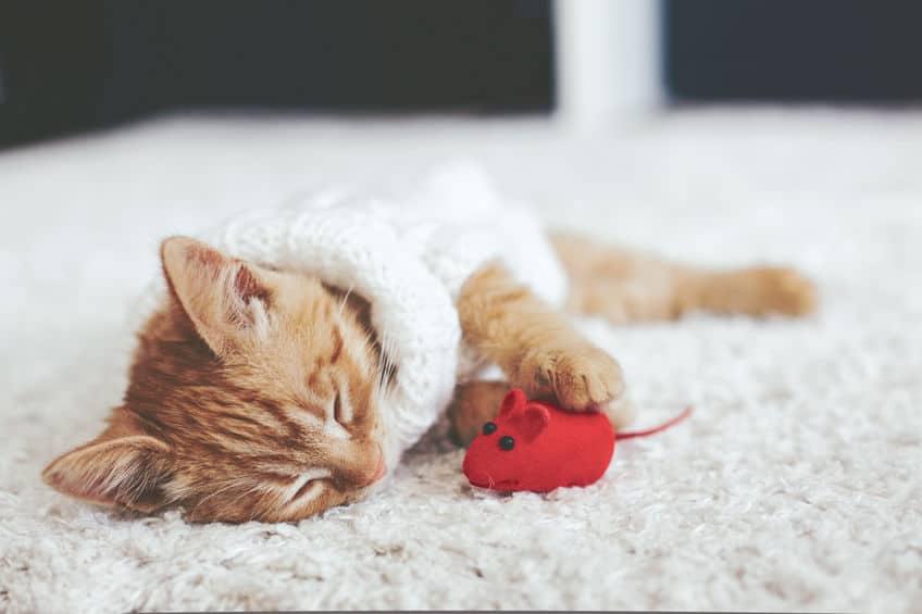 Gato brincando com rato vermelho.