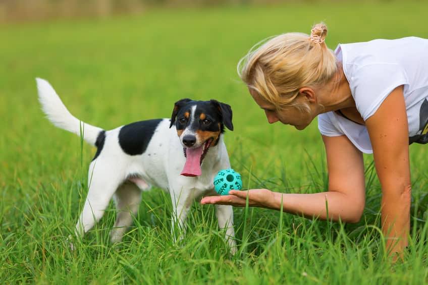 Imagem de cachorro e dona brincando em gramado.