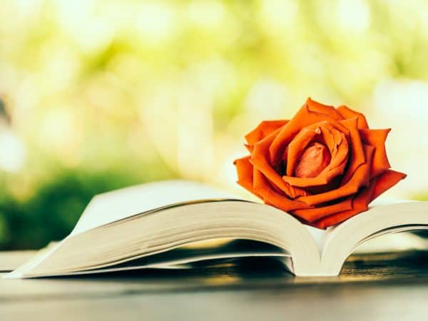 Rose on book – vintage effect style pictures