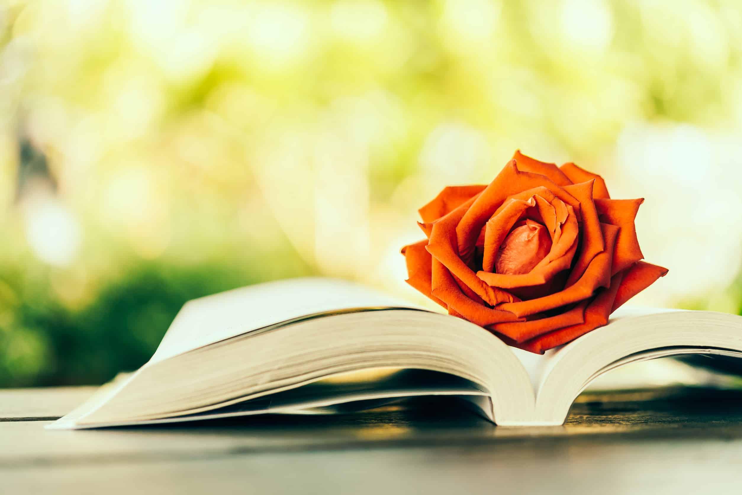 Imagem de livro aberto com rosa dentro.