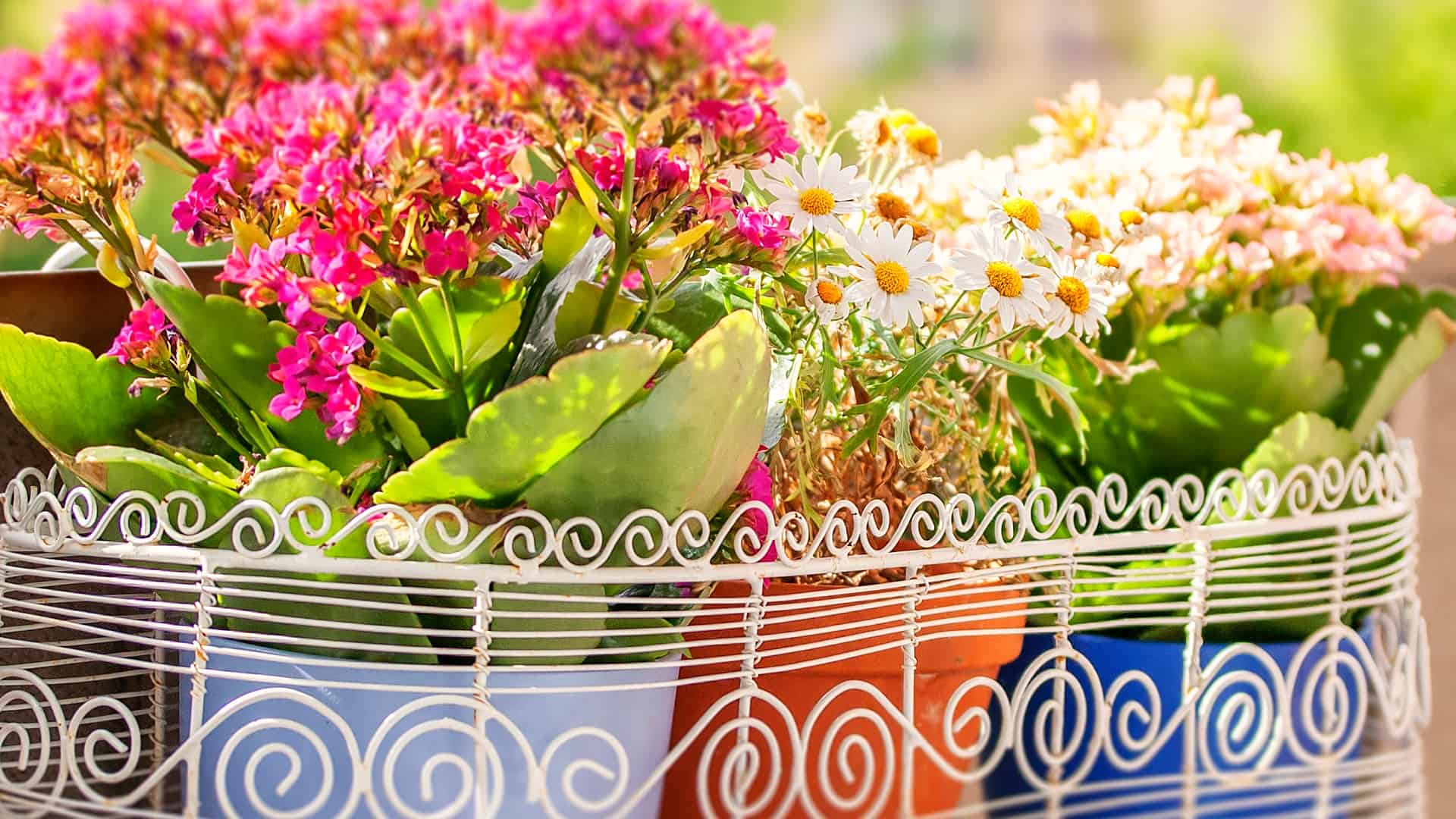 Imagem de cachepot com flores.