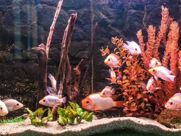 Imagem de aquário com peixes.