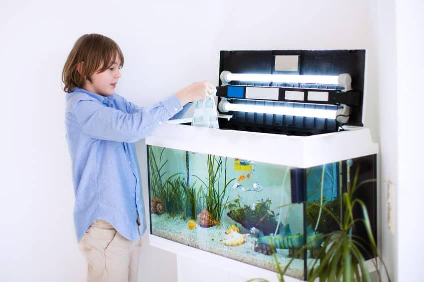 Imagem de menino em frente a um aquário.