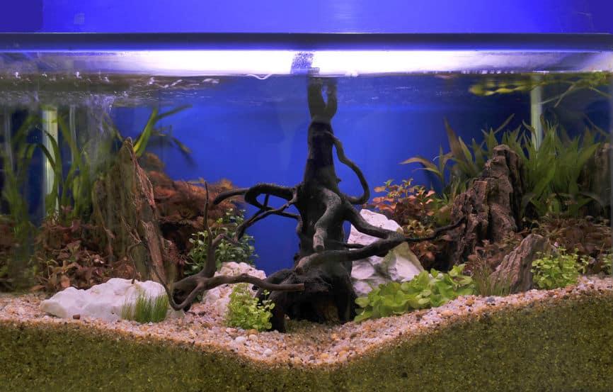 Imagem de aquário sem peixes, mas com decoração.