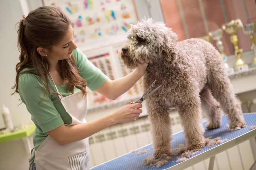 Imagem de mulher cortando pelo de cachorros.
