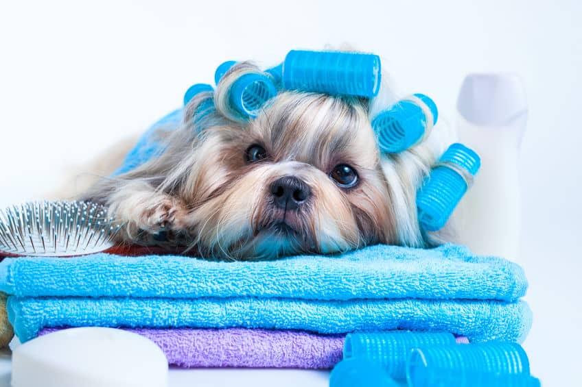Imagem de cachorro sobre toalhas com pente ao lado.