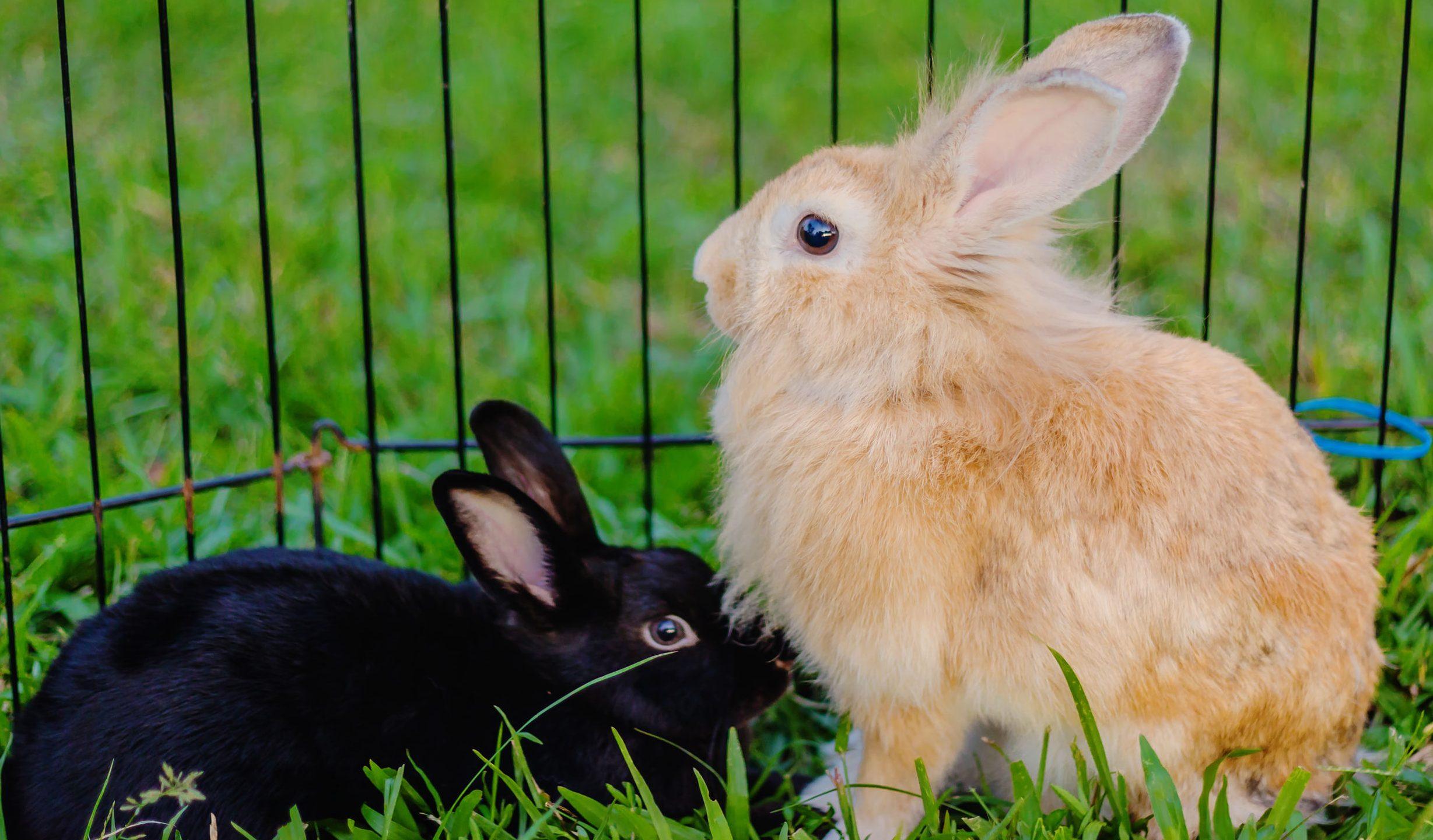 Gaiola para coelho: Qual é a melhor de 2021?