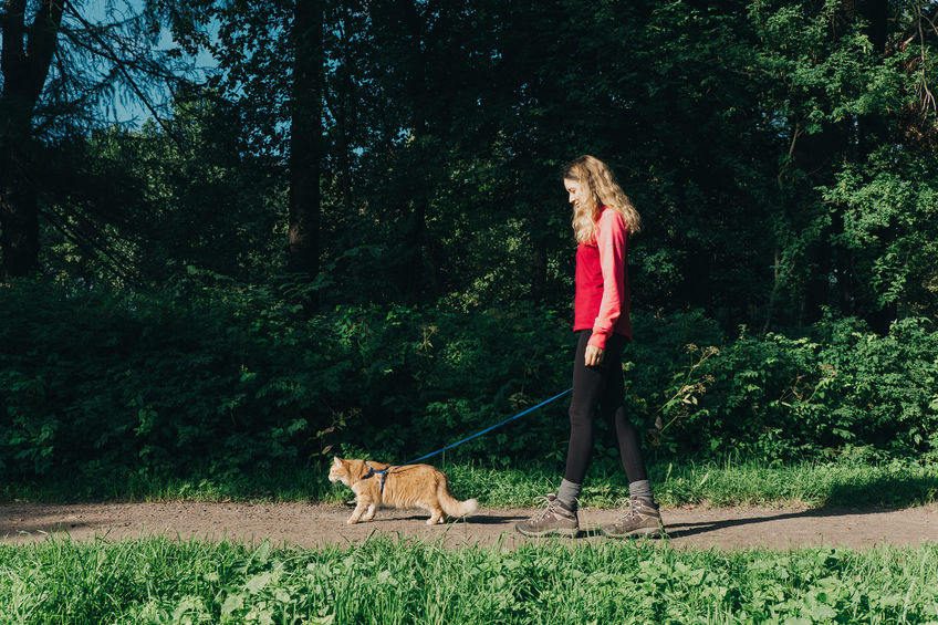 walking with a cat