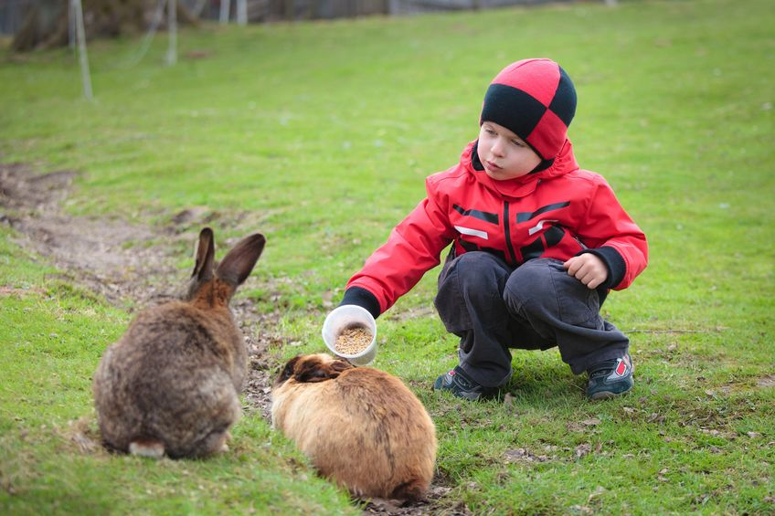 kid feeding rabbits