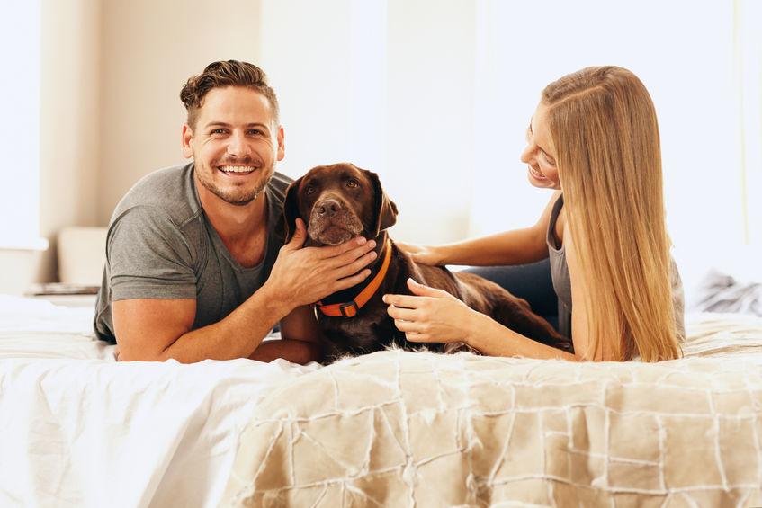 cachorro grande com seus donos