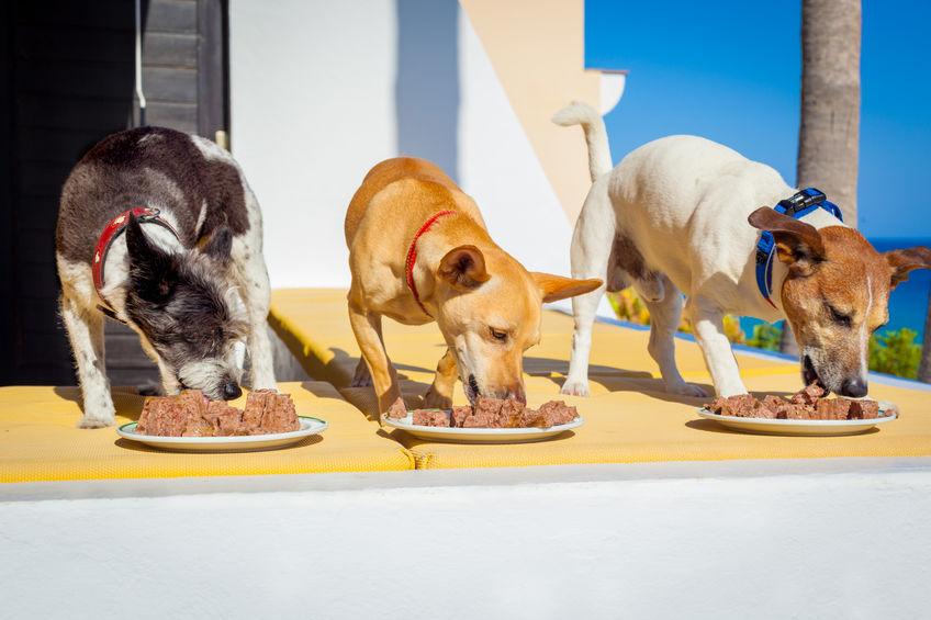 cães comendo