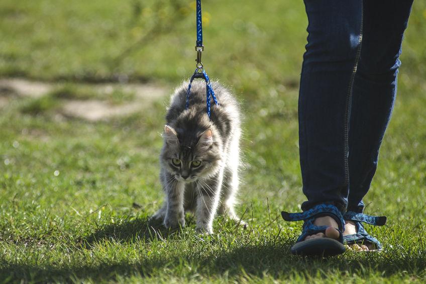 Cat walking