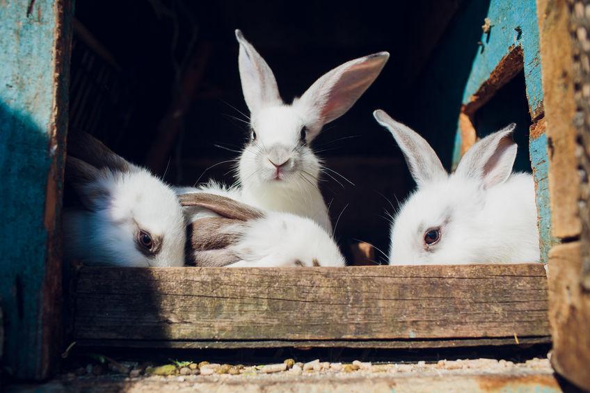 família coelho