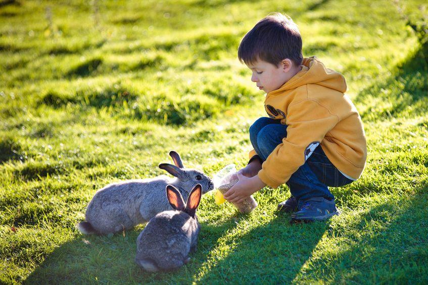 menino brincando com coelhos casal