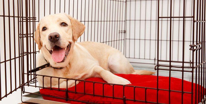 cão feliz em uma gaiola