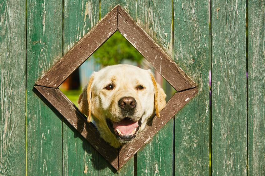 Cachorro enfiando a cabeça na cerca