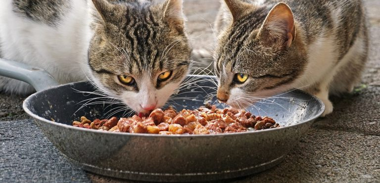 two cats eating