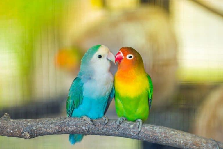parrot box
