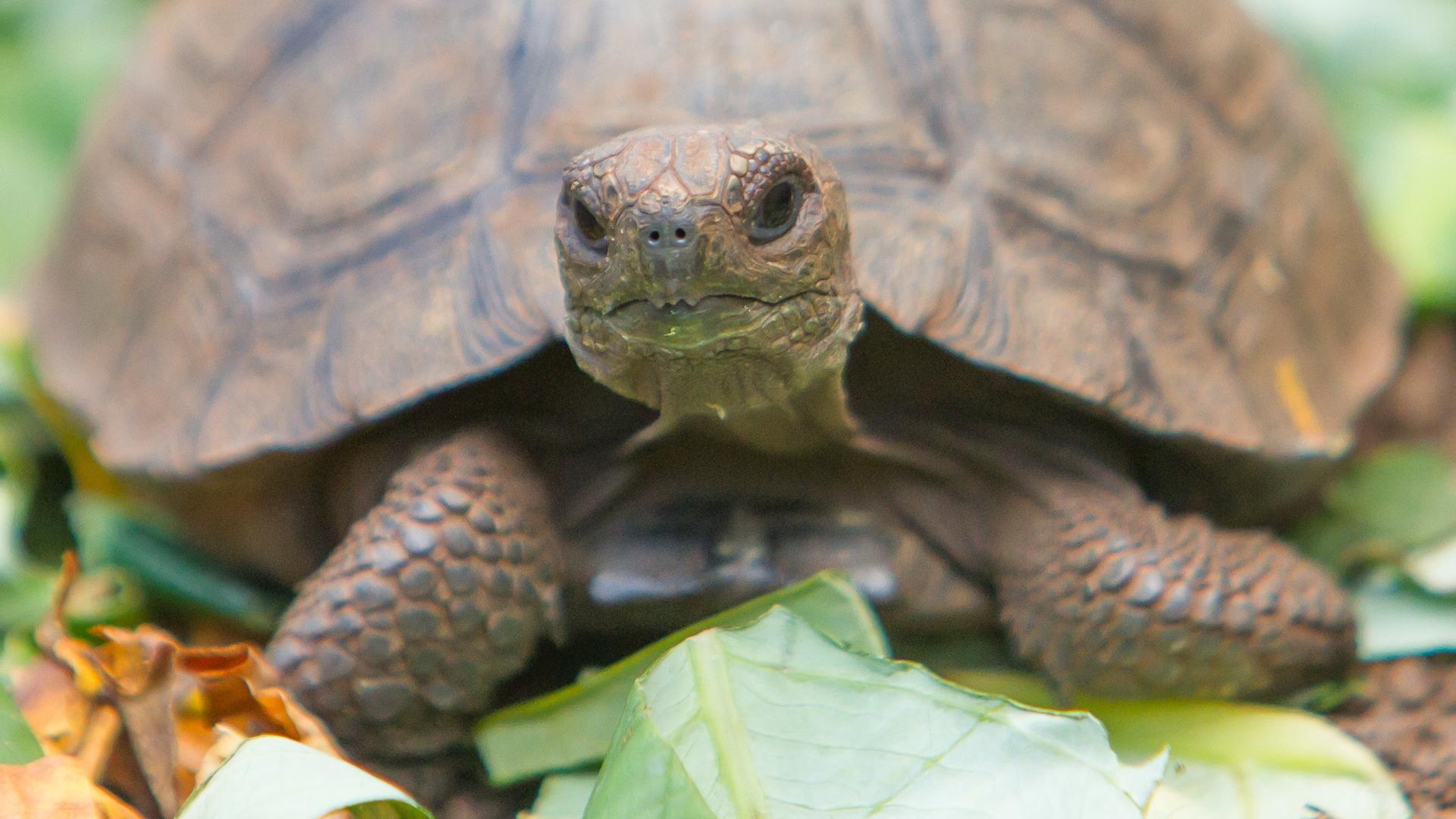 Ração de tartaruga: Qual é a melhor de 2020?