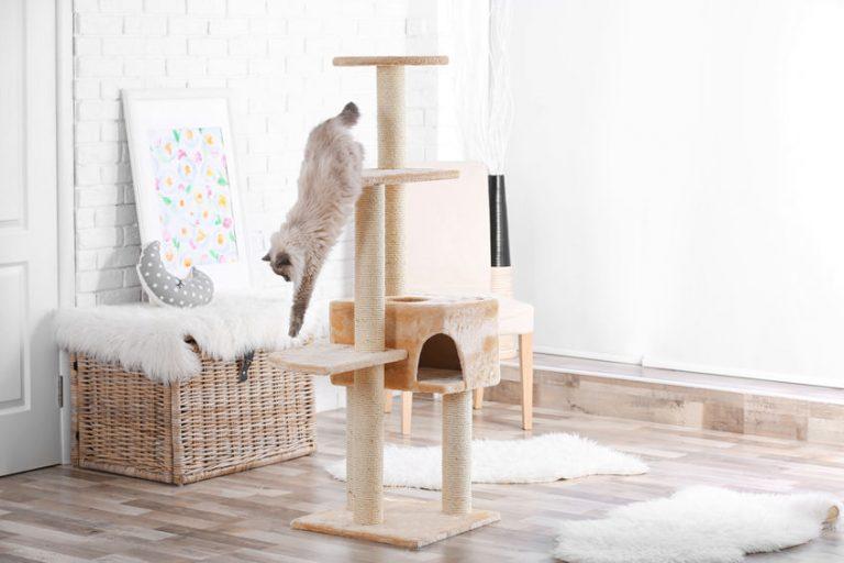 Arranhador para gato.