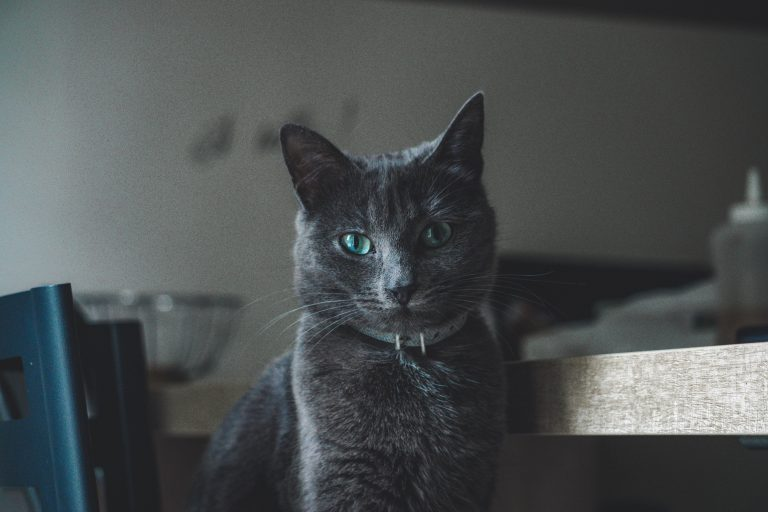 black cat with green eye s