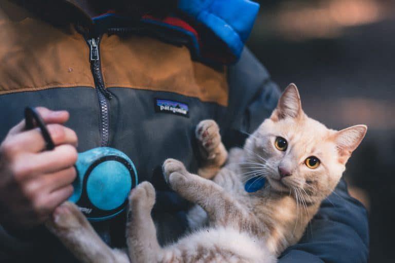 holding a little kitty