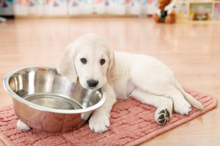 puppy with a bowl