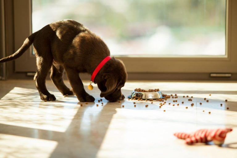 puppy eating some food
